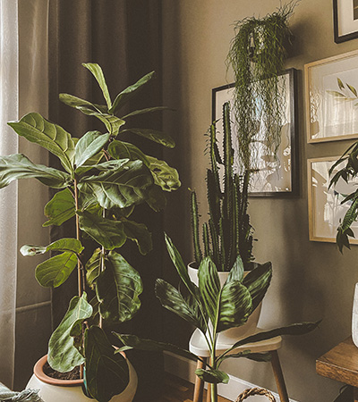 House plants in living room
